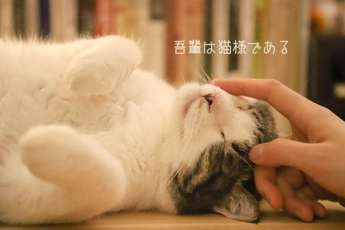 吾輩は猫様である