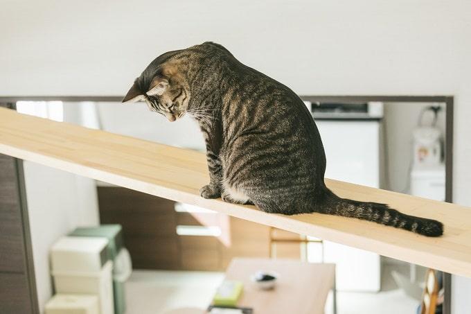 キャットウォークから部屋を見下ろす猫