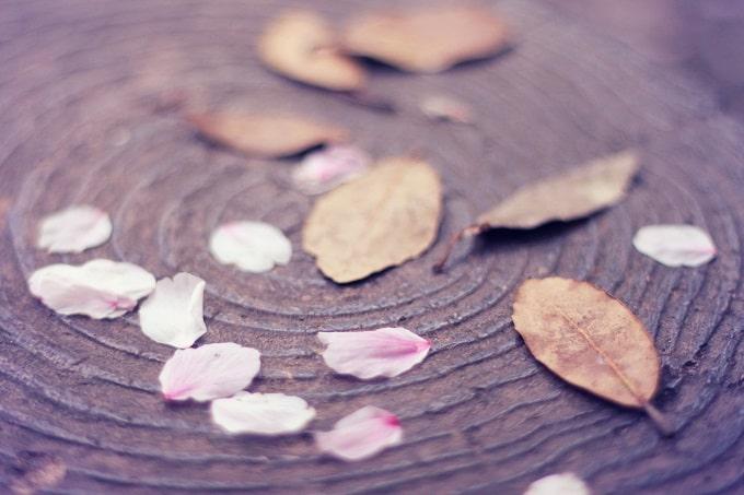 落ち葉と桜の花びら