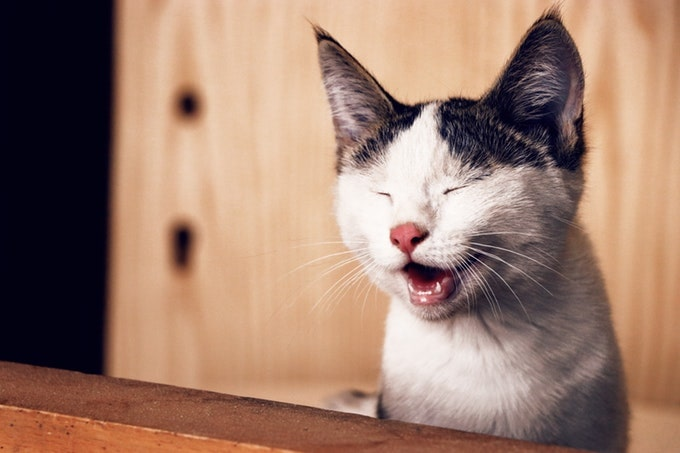 うにゃ~とした顔をする猫